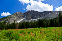 Albion Basin Hike-August 2011-3