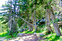 Albion Basin Hike-August 2011-82