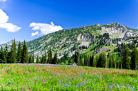 Albion Basin Hike-August 2011-83