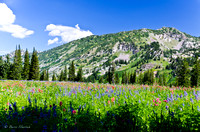 Albion Basin Hike-August 2011-85
