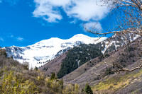 Spring in South Fork Canyon-2